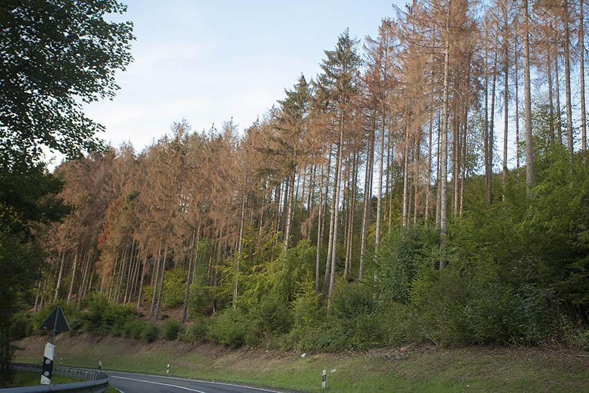 Besprechung: Waldbauliche Herausforderungen des Klimawandels
