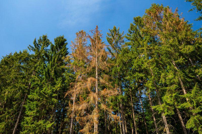 Land und Bund unterstützen kommunale und private Waldbesitzer