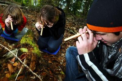 Wald macht Schule: 36. Wald-Jugendspiele gestartet