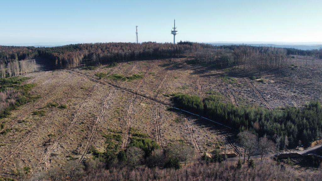 Zerstörter Wald – fehlendes Grundwasser