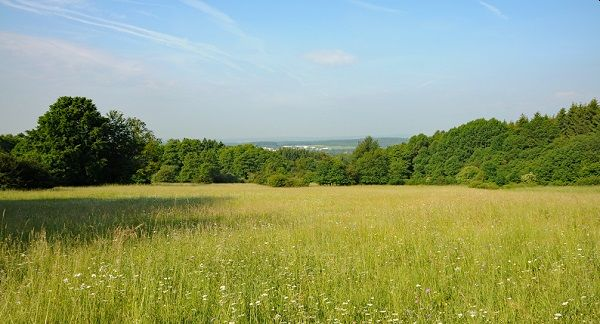 Naturkundlicher Spaziergang im Schimmelsbachtal