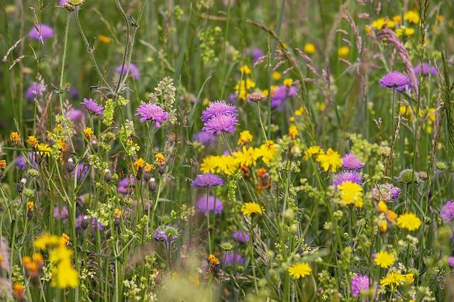 Pflege der Wildblumenwiesen und Wiesenstreifen in Bad Honnef