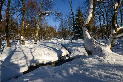 Winter-Exkursion rund um das Nationale Naturerbe Stegskopf