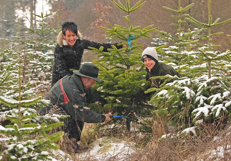 Wie wäre es mit einem Bio-Weihnachtsbaum aus der Region?