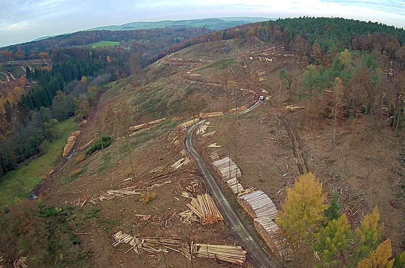 Drohnenfoto vom Waldsterben bei Pracht (Aufnahme: Björn Schumacher/Archiv)