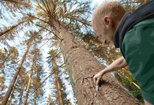 Der Wald leidet dramatisch: Kreiswaldbauverein lud zur Begehung ein