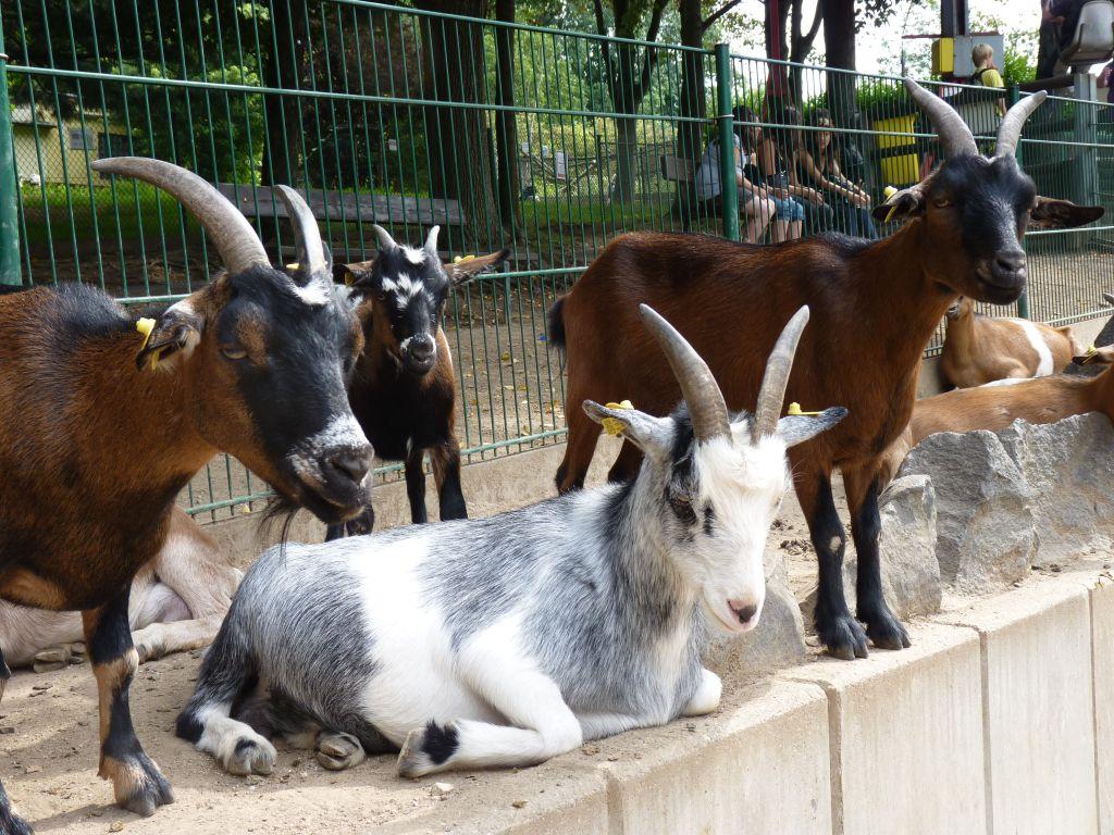 Haben die Zootiere die Besucher vermisst?