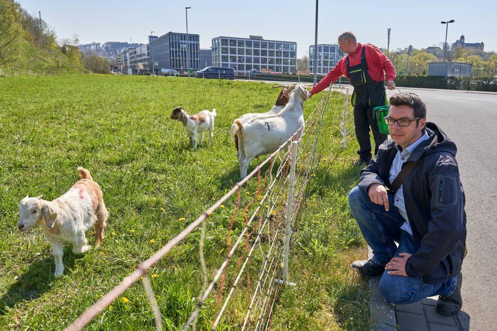 Schafe und Ziegen im Einsatz für den Naturschutz