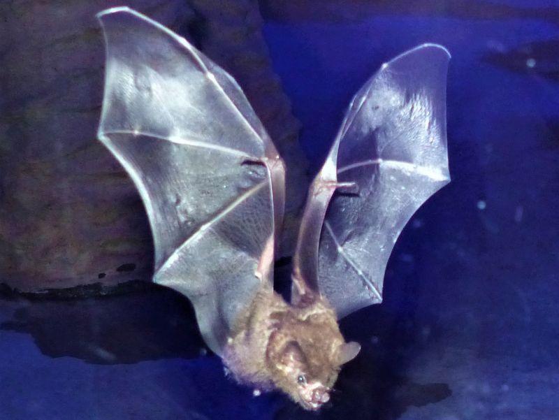 Machen die Nacht zum Tag: Fledermäuse im Zoo Neuwied
