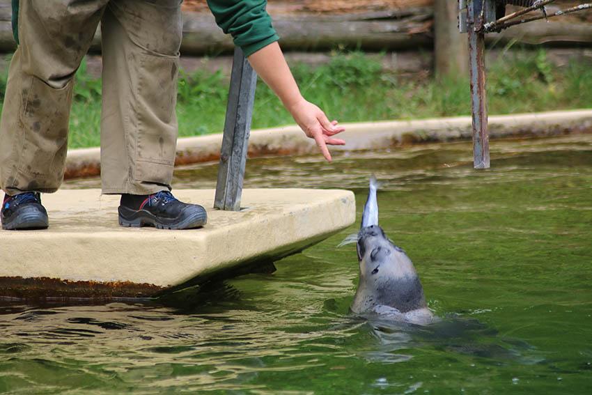 Sommerausflug der Gundlach Stiftung führte in den Zoo