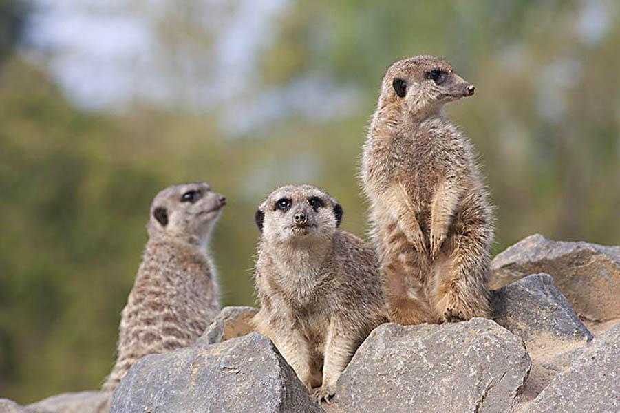 Zoo Neuwied muss schließen